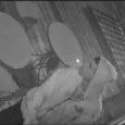 L'Unité des introductions par effraction du Service de police d'Ottawa fait enquête sur un récent vol par effraction dans un local commercial et sollicite l'aide de la population pour en […]